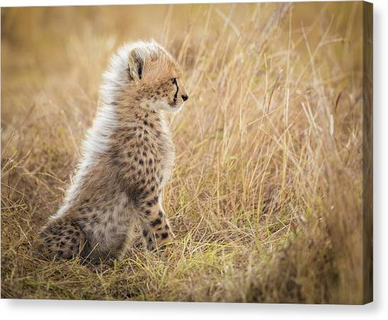 Camouflage Canvas Print - Watching You Mom by Faisal Alnomas