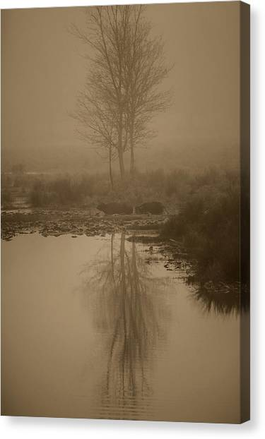 Water Buffalo Morning Fog Canvas Print by Frank Feliciano