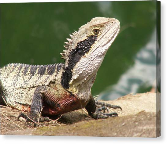 Canvas Print featuring the photograph Water Dragon Profile by David Rich