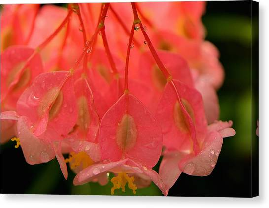 Water Droplets I Canvas Print by Kathi Isserman