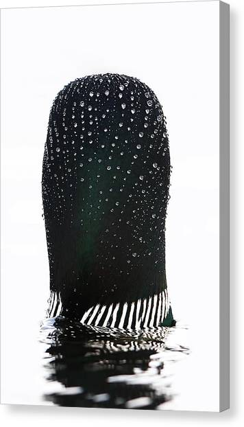Quebec Canvas Print - Water Drops On A Loon by Jim Cumming