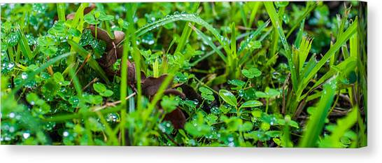 Water Drops On The  Grass 0052 Canvas Print by Terrence Downing