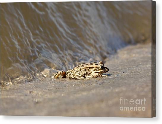 Water Frog Close Up  Canvas Print
