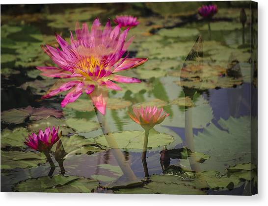 Water Garden Dream Canvas Print