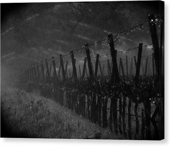 Black and white vineyard canvas print water into wine by bill gallagher
