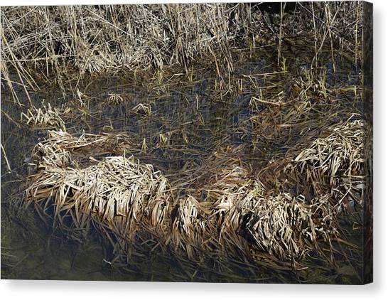 Dried Grass In The Water Canvas Print