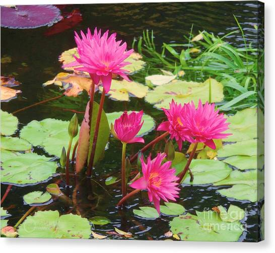 Water Lilies 008 Canvas Print