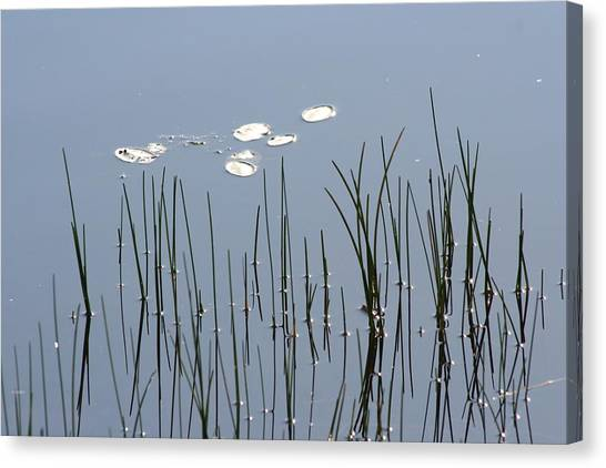 Water Lilies Canvas Print by Carolyn Reinhart