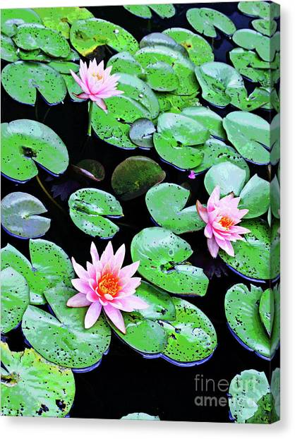 Water Lillies -- Inspired By Monet-2 Canvas Print