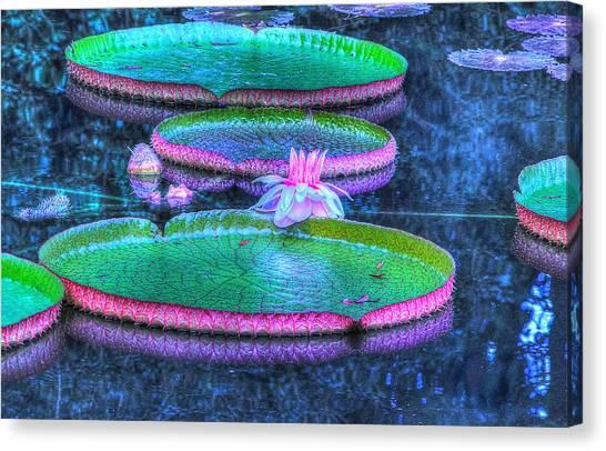 Flower 15 Canvas Print