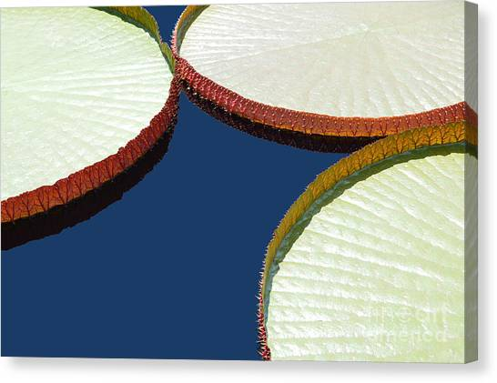 Water Lilly Platters Canvas Print