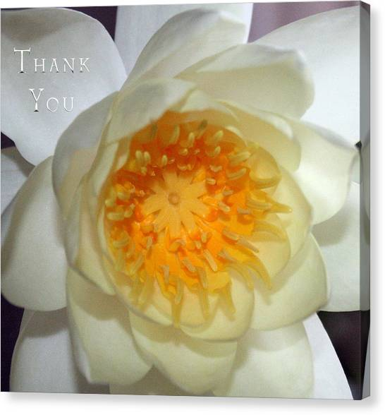 Lilies Canvas Print - Water Lily 2  And A Reminder To Utter The Words Thank You.  by Raenell Ochampaugh