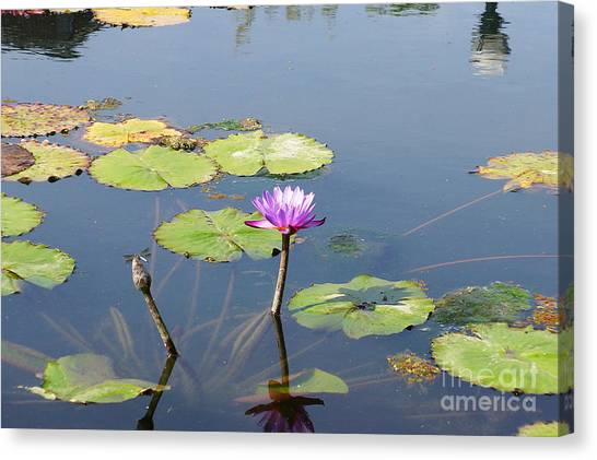 Water Lily And Dragon Fly Two Canvas Print