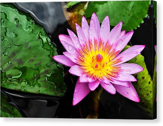 Canvas Print featuring the photograph Water Lily by Denise Bird