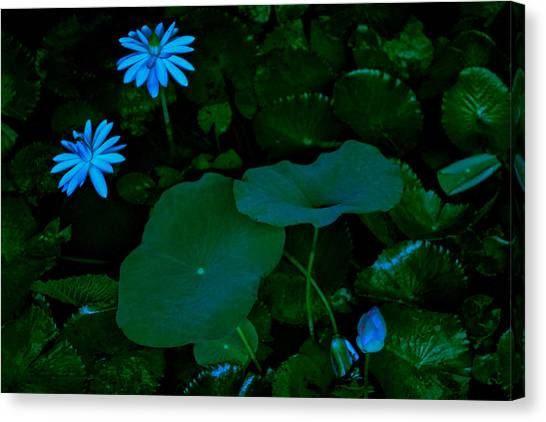 Water Lily Canvas Print by Donald Chen