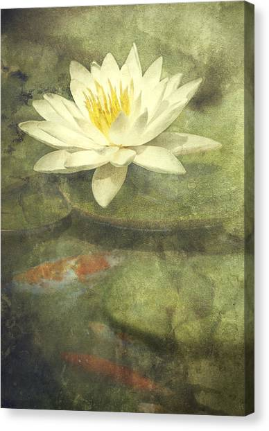 Lily Pond Canvas Print - Water Lily by Scott Norris