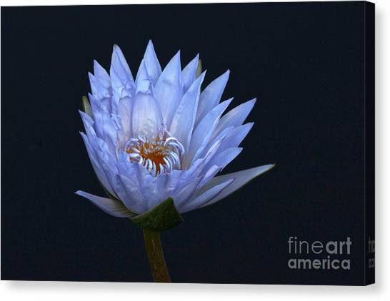 Water Lily Shades Of Blue And Lavender Canvas Print
