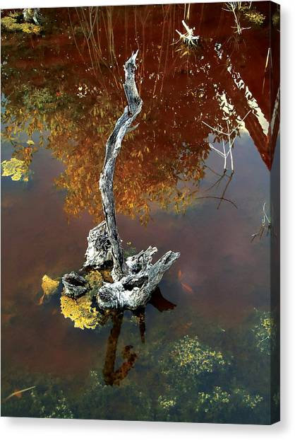 Water Stick Canvas Print by Mike Feraco