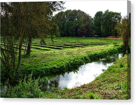 Watercress Canvas Print - Watercress Field by Olivier Le Queinec