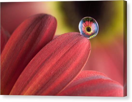 Waterdrop On Flower Petal Canvas Print