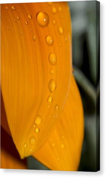 Waterdrops Canvas Print by Amr Miqdadi