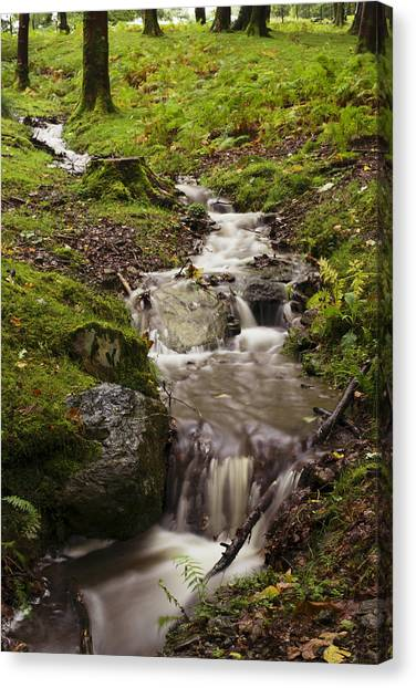 Mossy Forest Canvas Print - Waterfall by Amanda Elwell