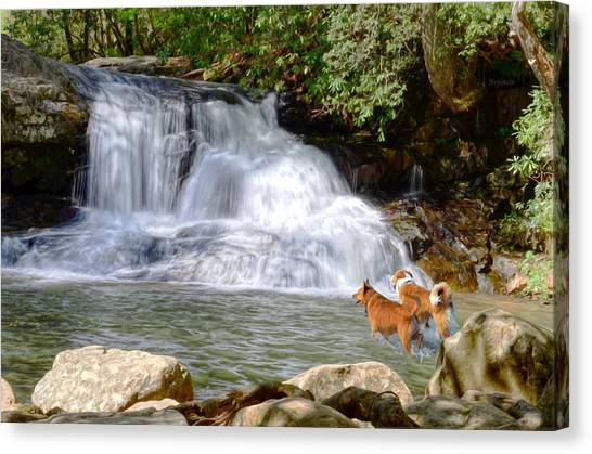 Waterfall Dogs Canvas Print by Bob Jackson