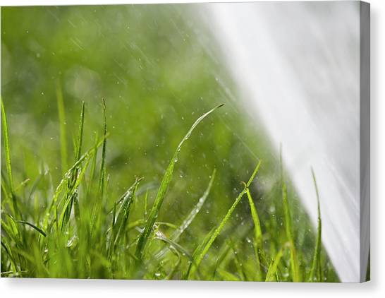 Blade Of Grass Canvas Print - Watering The Grass by Gustoimages/science Photo Library