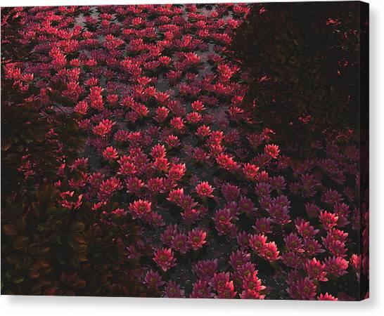 Waterlilies 2 Canvas Print