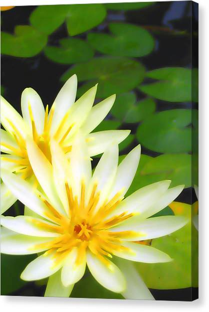 Waterlilies In Pond Canvas Print
