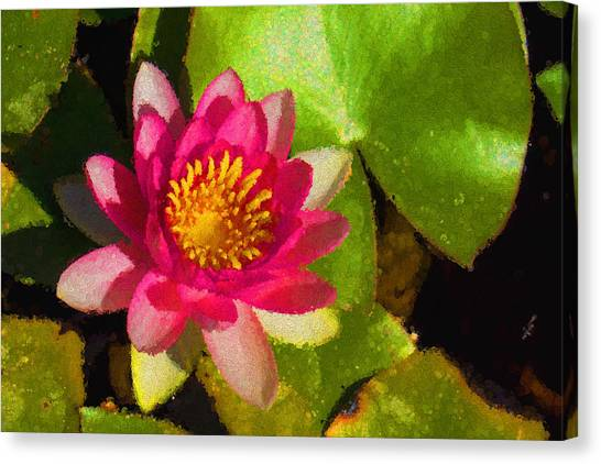 Waterlily Impression In Fuchsia And Pink Canvas Print