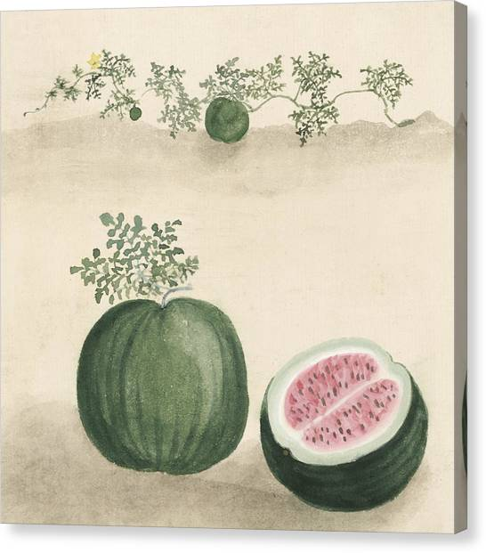 Watermelons Canvas Print - Watermelon by Aged Pixel