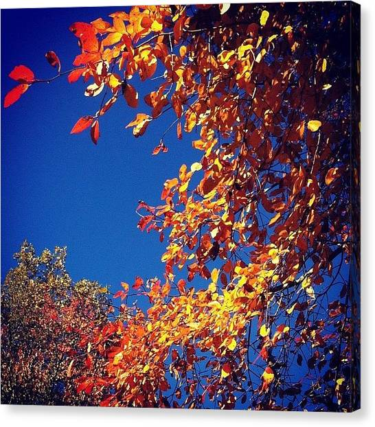 Orange Tree Canvas Print - Wave Of Leaves by Kathleen Barnes