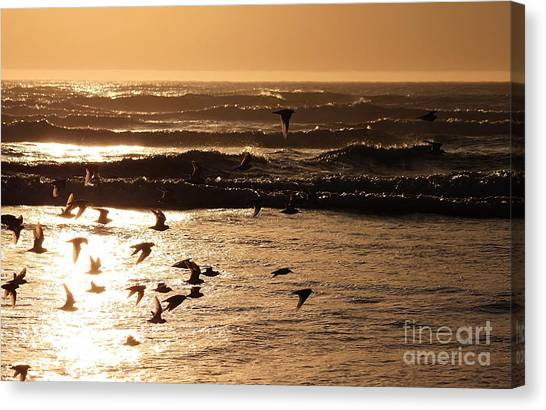 Waves And Wings Canvas Print
