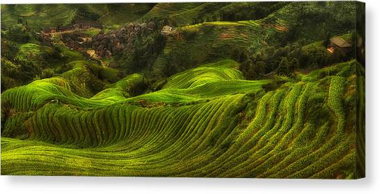 China Canvas Print - Waves Of Rice - The Dragon's Backbone by Max Witjes