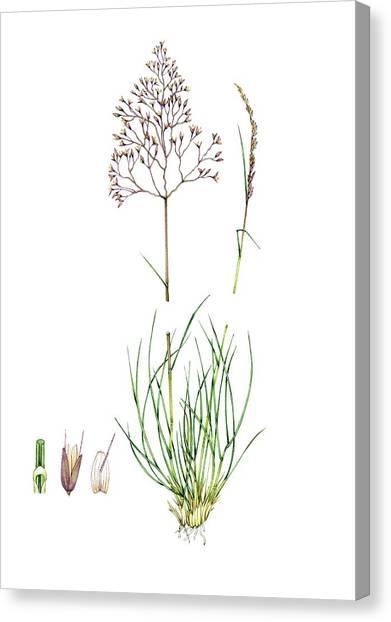 Flower Anatomy Canvas Prints (Page #7 of 14) | Fine Art America