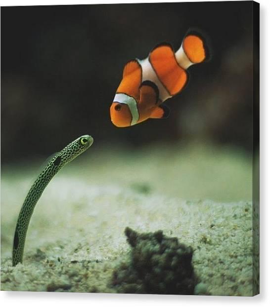 Tropical Fish Canvas Print - We All Know Nemo by Jamaleo Hall