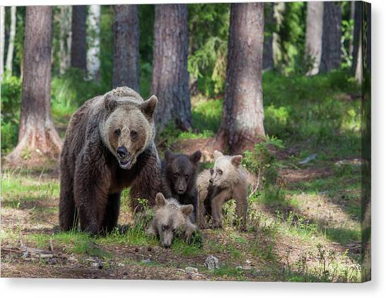 Brown Bears Canvas Print - We Are Family by Alessandro Catta