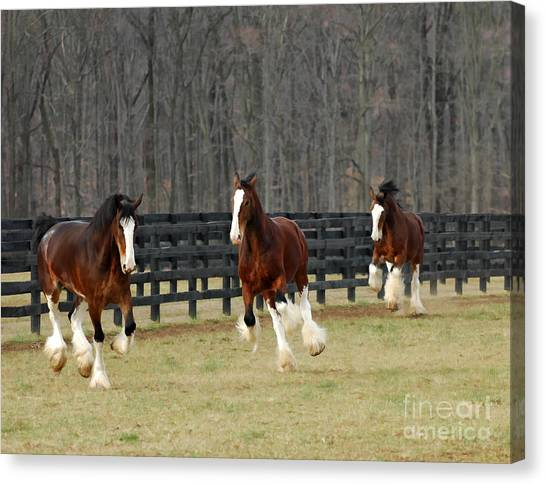 Horse Farms Canvas Print - We Feel Like Dancing by Sami Martin