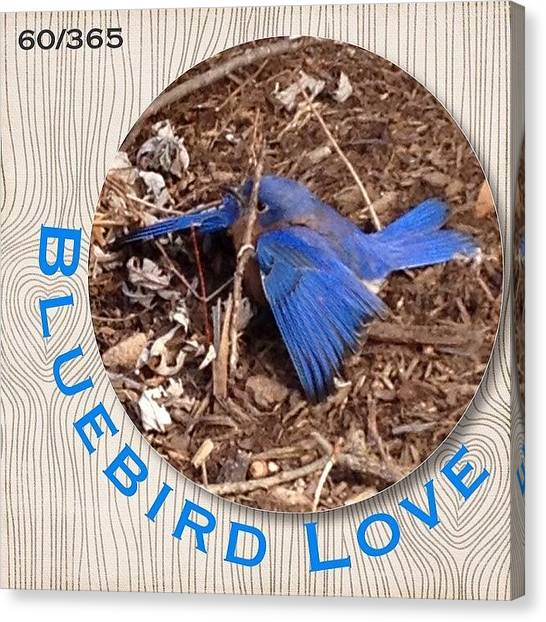 Songbirds Canvas Print - We Love Our #bluebirds And Today When I by Teresa Mucha