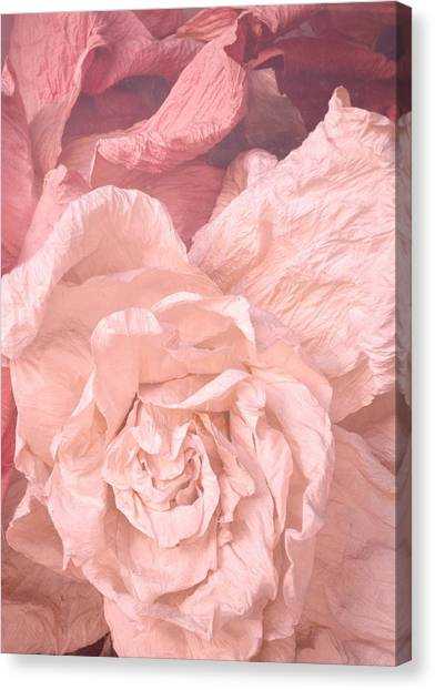 Weathered Roses Canvas Print