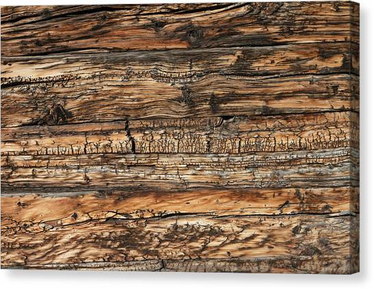 Weathered Wood 5 Canvas Print by Charles Lupica