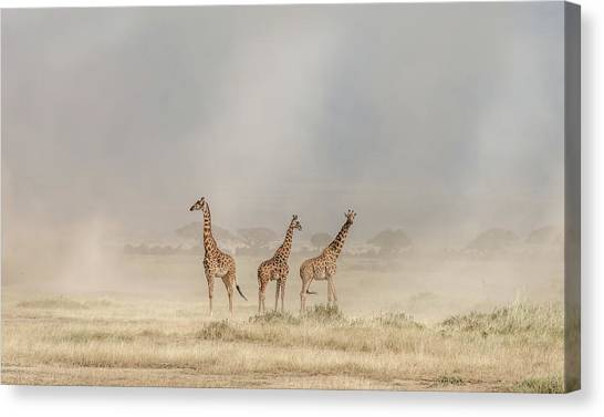 Neck Canvas Print - Weathering The Amboseli Dust Devils by Jeffrey C. Sink