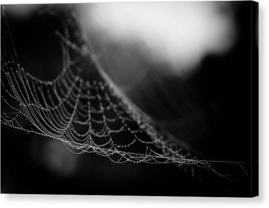 Spider Web Canvas Print - Web Hammock by Shane Holsclaw