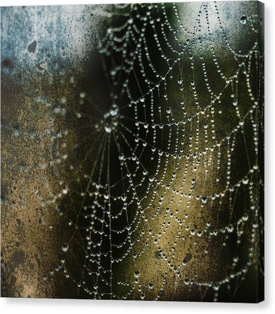 Web In The Mist Canvas Print