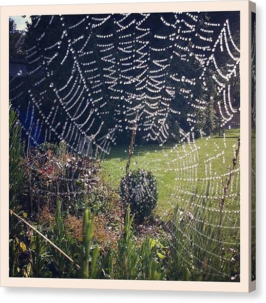 Spider Web Canvas Print - Web by Kate Makin