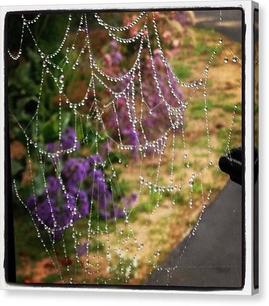 Spider Web Canvas Print - Web Of Dew Drop Diamonds by Michele Beere
