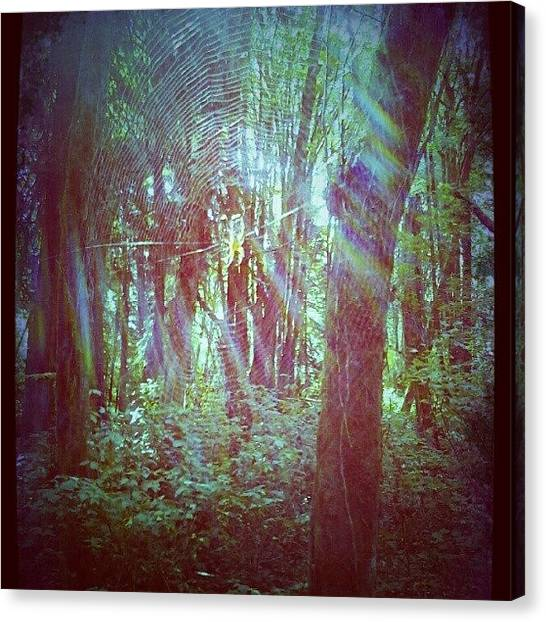Spider Web Canvas Print - #webporn #spiders #webs #photooftheday by M R M