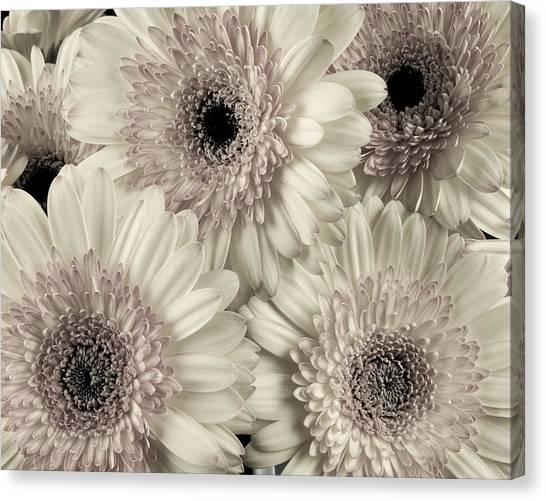 Wedding Bouquet -gerbera Duotone Canvas Print
