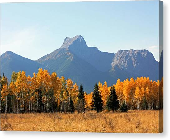 Wedge Mountain And Aspen Canvas Print